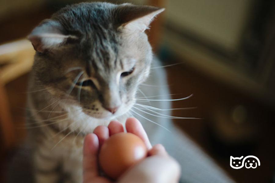gato huevo